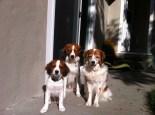 Amica, Toni, Nelle outside