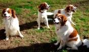 Finn, Amica, Rusty, Nelleke