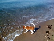 barking at the water