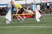 Bullbenz Kooi Olly Sade -Olli running the agility course.