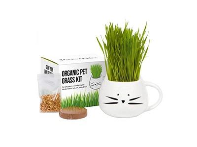 Win a Cat Grass Garden