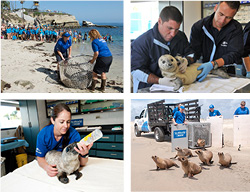 SeaWorld Animal Rescue Teams based in San Diego, Orlando and San Antonio, are on call 24/7 to give ill, injured and stranded marine mammals and sea birds a second chance at life. Nationally, more than 23,000 animals have been rescued and rehabilitated. COURTESY SEAWORLD