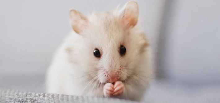 close up photo of white mice