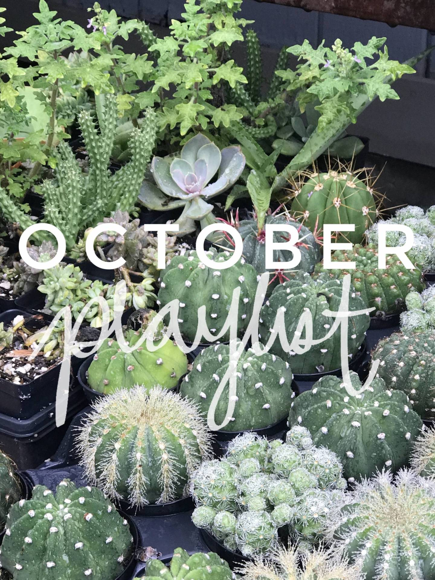 October Playlist – 10 Songs to Listen to This Month.