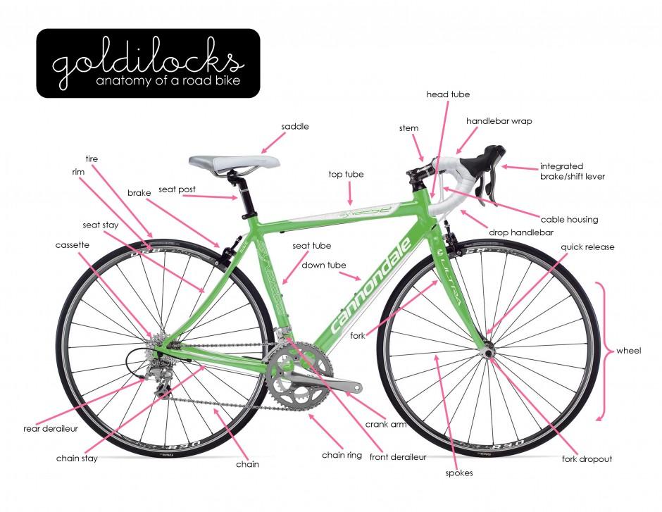 Bicycle Anatomy Diagram Images - human anatomy diagram organs