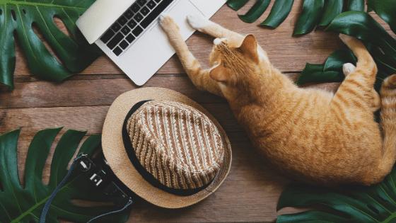 Flexible Side Hustles for Digital Nomads - Goldilocks Effect