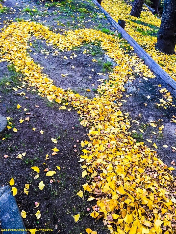 Heart made by fallen autumn leaves at Osaka Castle