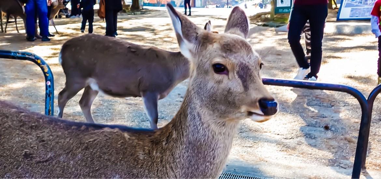 A day trip to Nara from Osaka