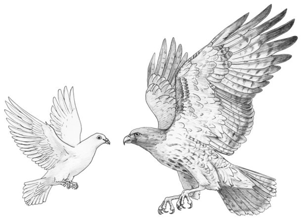 hawk_and_dove_commission_by_silvercrossfox-d564iom