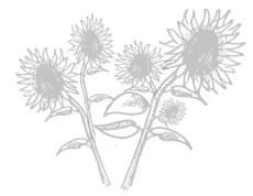 sonnenblumen-230