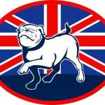 proud-english-bulldog-marching-with-british-flag_MJBjSvUu_L