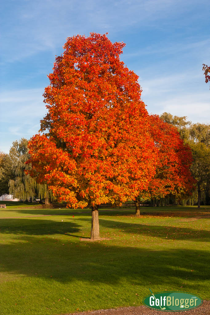 Fall Color On The Golf Course