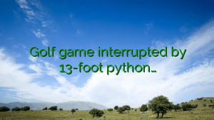 Golf game interrupted by 13-foot python…