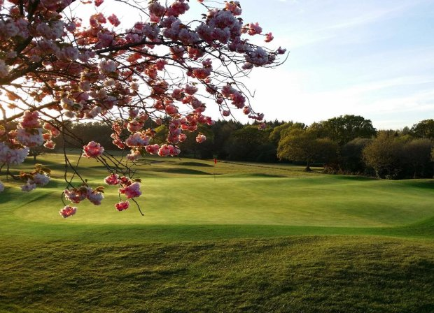 dorset-golf-and-country-club-twitter