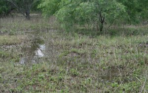 Texas Weather: Persistent Drought with Occasional Flooding