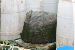Photo of a fry cage to be placed in a breeding vat to provide a refuge for fry and juvenile fish.
