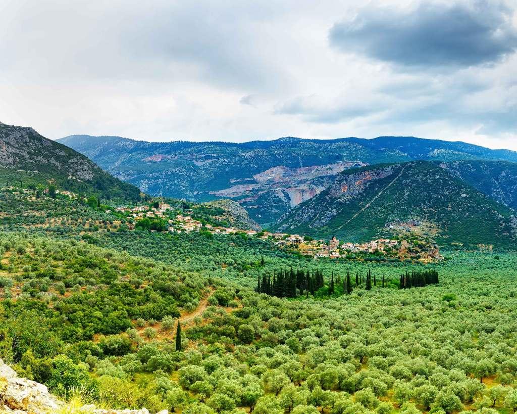 amfissa-olives-itea-greece-like-local