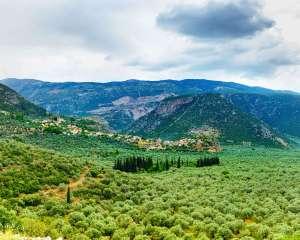 amfissa-olives-itea-greece-facts