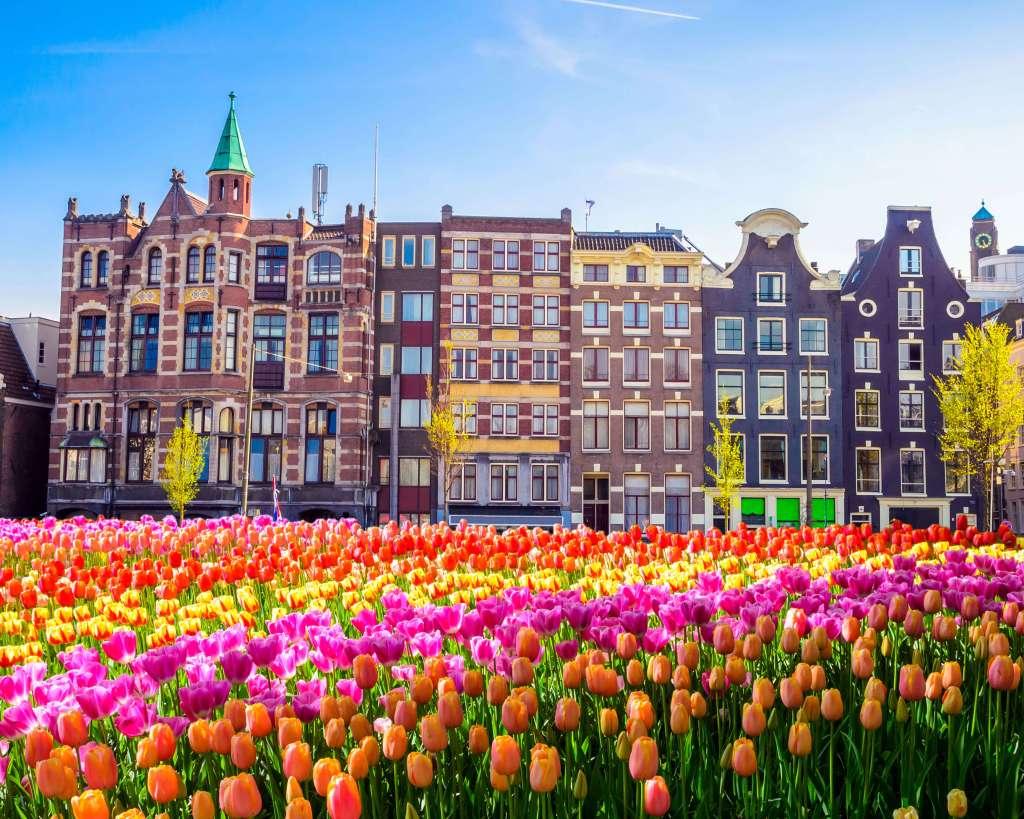 amsterdam-holland-tulips-dancing-houses