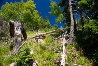 Steep hillsides on Middle Head