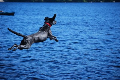 Leila diving in the lake – Go Fetch