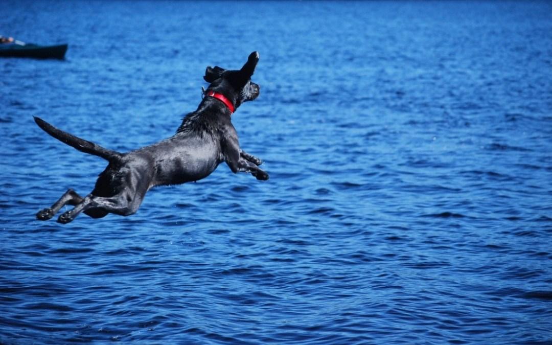 Leila of the Lake
