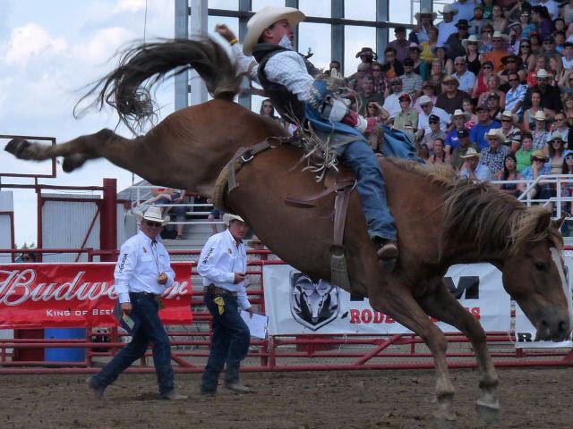 Live Video Ponoka Stampede 2016 Pro Rodeo Prca Events