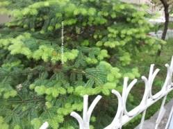 "© Golnaran, ""Green Spring"", Kucuk Esat - Bulbul Sok., Çankaya, original size: 2560×1920 pix.2012 - Ankara, 2012"