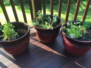 Herbs_June2014