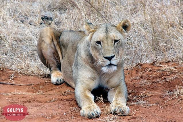 kenyan safari