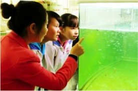 Care about Environment, Save Jelly Fish Project - With teachers' guidance, students develop their awareness of environmental problems and stay conscientious to protect environment.