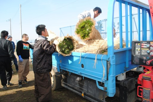 forest_workers_while_hauling_the_seedlings_from_the_nursery