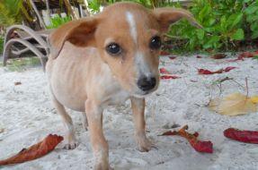 help-neglected-animals