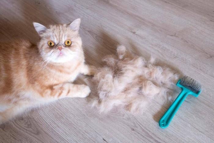 貓黴菌掉毛