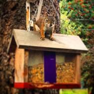 080216 Squirrel