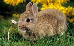 bunnyrabbit-large_trans++Km3YcDI1ZVq0mT8Cxo2c41Vse9JsN00kzbUr3IXHaGo