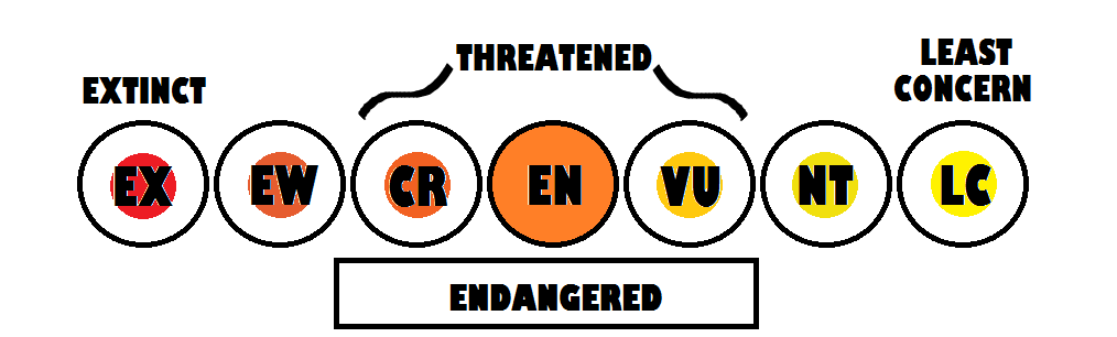 Conservation status is Endangered