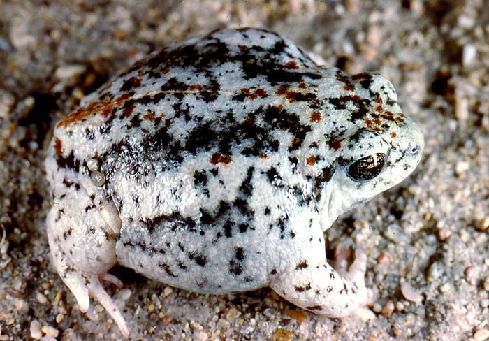 frogswe2