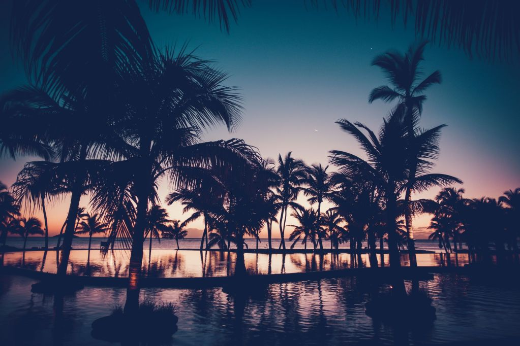 Beautiful sunset through palm trees on Mauritius