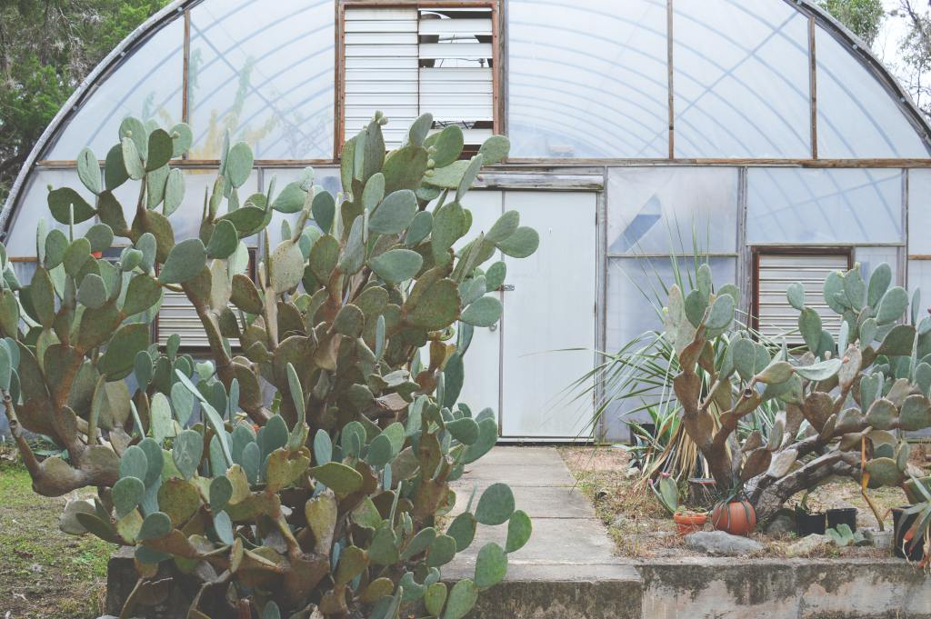 cactus in front of greenhouse
