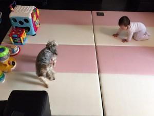 Baby Milestones Crawling