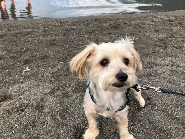 Safe Flea Treatment For Dogs