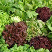 Indoor Garden - OGarden Organic Seeds