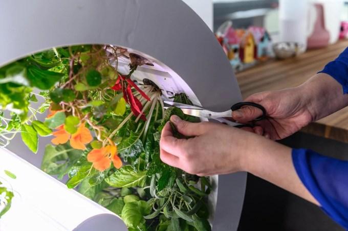 Indoor Garden - OGarden Smart harvesting