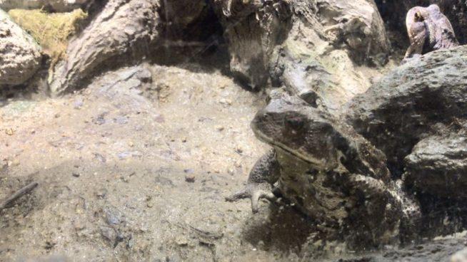 爬虫類生態館