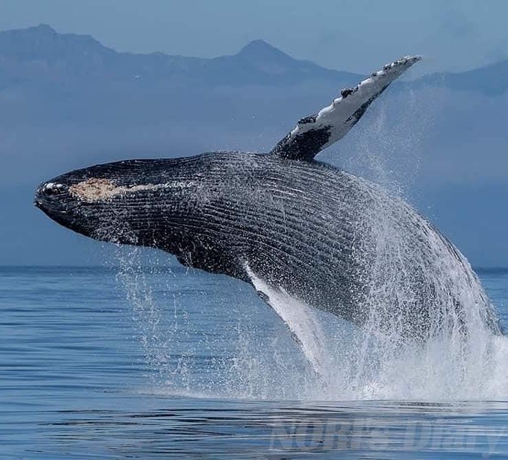 まつもとあきこ写真クジラ飛ぶ