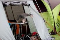 Der Zwerg bewacht sein Zelt! Süß!