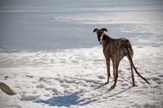 Schau mal ich steh am Eis!