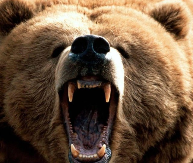 7 Rules When Bankers Face The Bear