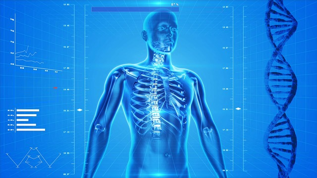 An xray illustration of a human body showing the spine and rib bones.
